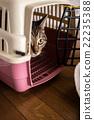 Cat 22235388