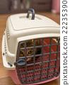 Cat 22235390