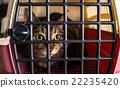 Cat 22235420