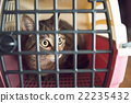 Cat 22235432