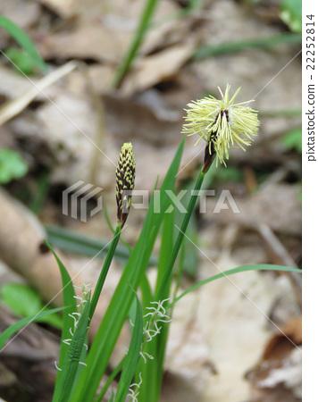 Sapporo's garden flowers 22252814