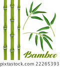 bamboo, leaf, vector 22265393