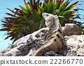 Iguana stone 22266770