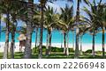 Palm garden 22266948