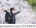 벚꽃과 신학기 소년 22268836