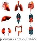 heart organ pain 3d rendering 22270422