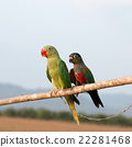 Parrot on a perch on wooden 22281468