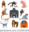 Monkey vector illustration 22284269