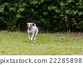 Adorable Funny Dog With His Favorite Ball 22285898