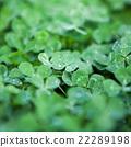 clover leaves 22289198