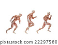 Running cycle. Anatomical illustration. Isolated 22297560