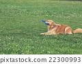 動物 狗 狗狗 22300993