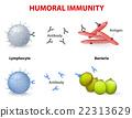 humoral immunity. 22313629