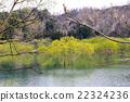 호수 나무 22324236