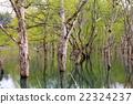 호수에 사는 나무 22324237
