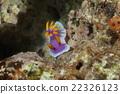 海參 海裡 海底的 22326123