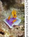海参 海里 海底的 22326124