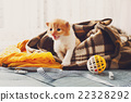 Red orange newborn kitten in a plaid blanket 22328292