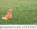 狗 狗狗 大型狗 22332922