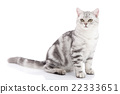 kitten sitting on white background 22333651