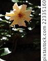 Yatsu玫瑰园 22335160