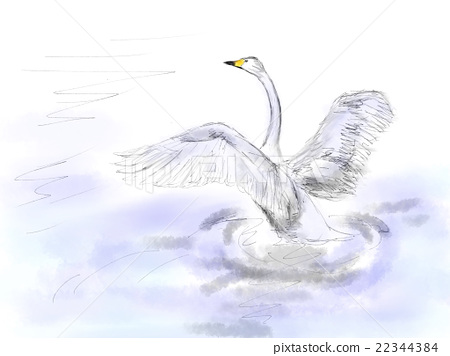 Swan illustration 22344384