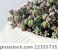 succulent plants 22355735