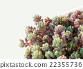 succulent plants 22355736