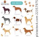 Dog breeds. Hunting dog set icon. Flat style 22357975