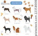 Dog breeds. Miniature toy dog set icon. Flat style 22358008