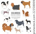 Dog breeds. Miniature toy dog set icon. Flat style 22358009
