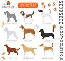 Dog breeds. Hunting dog set icon. Flat style 22358035