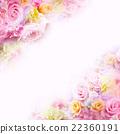 rose, roses, wallpaper 22360191