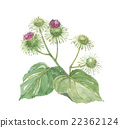 great burdock, flowers, flower 22362124