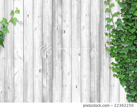 [背景]白木板和常春藤02 22362250