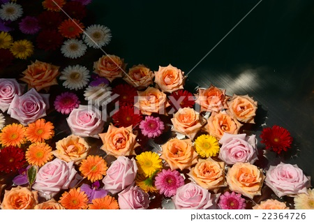 Roses and Gerberas floating on the water 22364726