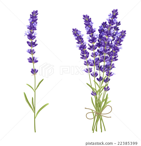 lavender cut flowers realistic image stock illustration