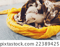 White Newborn kittens in a plaid blanket 22389425