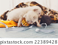 White Newborn kittens in a plaid blanket 22389428