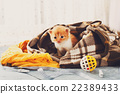 Red orange newborn kitten in a plaid blanket 22389433