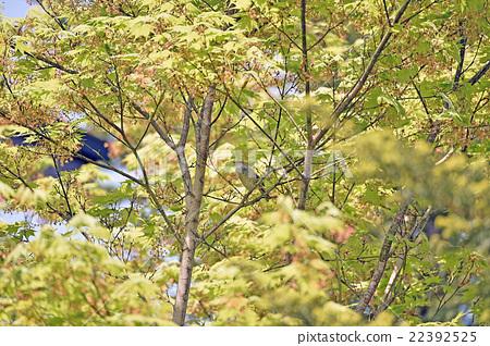 Twig chirping 22392525