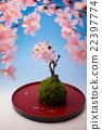 ดอกซากุระบาน,ซากุระบาน,ดอกไม้ 22397774