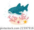 鯨鯊 鯊魚 海底的 22397916