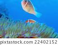 小丑魚 熱帶魚 海魚 22402152