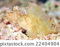 石魚 葉魚 紙魚 22404904