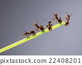 Team of ants. 22408201