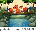animal, fox, river 22414193