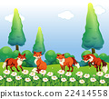 animal, fox, field 22414558