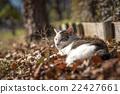 流浪貓 貓 貓咪 22427661