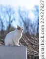 猫 杂色猫 哺乳动物 22427827